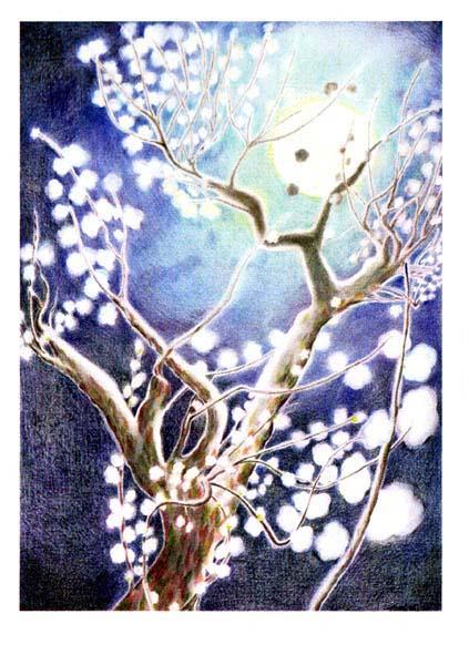 ポストカード・真夜中の梅木